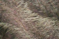 Pola w wiatrze Obraz Royalty Free