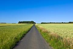 Pola z pasem ruchu i niebieskim niebem Fotografia Stock