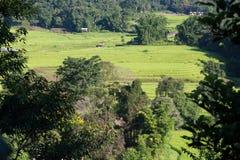 pola zielenieją ryżu taras Zdjęcie Royalty Free