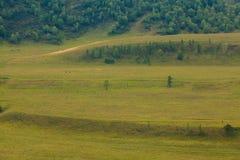 pola zielenieją wzgórza Zdjęcie Royalty Free