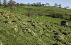 Pola, zielone łąki i drzewa, Szczytowy okręg, Anglia UK obraz stock