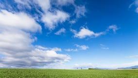 pola zielone niebo niebieskie Zdjęcie Stock