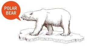 Polaire Bear Royalty-vrije Stock Afbeelding
