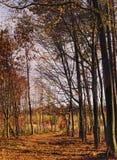 Polana w deciduous lesie zakrywającym w spadać kolorze żółtym suszącym Zdjęcie Stock