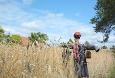 poland Épouvantail sur le champ de blé Vue horizontale Images libres de droits