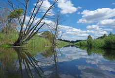 Poland.Brda river in summer.Horizontal view. Poland in summer.Pomerania.Horizontal view on the Brda river.Clouds beautifully reflected in the water.Nature Royalty Free Stock Photo