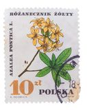 POLAND - CIRCA 1967: A stamp printed in  shows Azalea Pont Royalty Free Stock Images