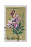 POLAND - CIRCA 1962: A stamp printed in shows Dictamnus royalty free stock images