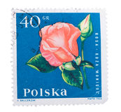 POLAND - CIRCA 1964: A stamp is printed in  shows flower r Royalty Free Stock Image