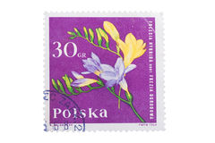 POLAND - CIRCA 1964: A stamp is printed in  shows freesia Royalty Free Stock Image