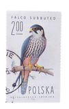 POLAND - CIRCA 1975: a stamp printed in the  shows Hobby F. POLAND - CIRCA 1975: a stamp printed in the Poland shows Hobby Falcon, Falco Subbuteo, Bird of Prey Stock Photo