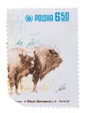 POLAND - CIRCA 1981: A Stamp printed in  shows  series of Royalty Free Stock Photos