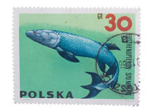 POLAND - CIRCA 1966: stamp printed in  shows a series of p Stock Image