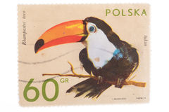 POLAND - CIRCA 1972: A stamp printed in shows toucan, ser stock photography