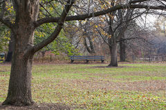 poland för park för höstbänknatur säsongsbetonad sikt arkivfoton