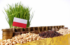 Poland flag with stack of money coins and piles of wheat. Poland flag waving with stack of money coins and piles of wheat and rice seeds Stock Images