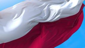 Poland flag video waving in wind 4K. stock illustration