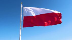 Poland flag waving in the wind. On flagpole on blue sky background stock footage