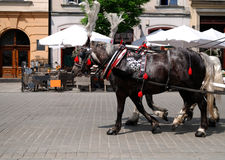 Poland krakow horse carriage Stock Images