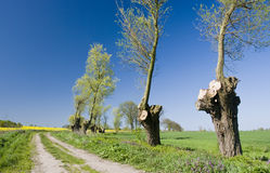 Poland landscape. Poland. Beautiful Polish rural landscape with a country road leading deep into the fields, interesting trimmed trees at the side royalty free stock photography