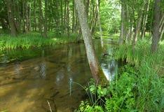 Poland.Pomerania.Kulawa river in summer.Horizontal view Royalty Free Stock Photography