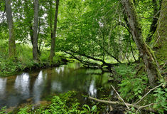 Poland.Pomerania.Kulawa river in summer.Horizontal view Royalty Free Stock Image