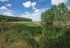 poland Rio de Brda no verão Vista horizontal imagens de stock