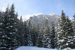 Poland, Tatra mountains. Forest and mountains - winter landscape stock photo
