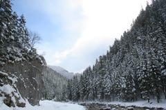 Poland, Tatra Mountains. Fragment of forest in Tatra Mountains Stock Image