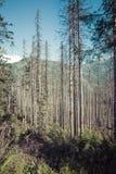 Poland - Tatra National Park in Tatra Mountains, part of Carpath Stock Photo