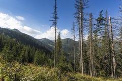 Poland - Tatra National Park in Tatra Mountains, part of Carpath Royalty Free Stock Photo