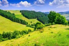 Polany blisko sosnowego lasu na skłonach góry dalej seren Obrazy Royalty Free
