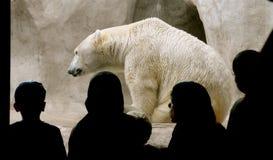 polar åhörarebjörn Royaltyfria Foton