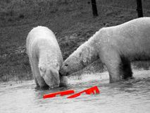 polar Imagen de archivo libre de regalías