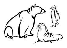 Polar Animals Stock Photo