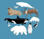 Polar animals collection Stock Photo