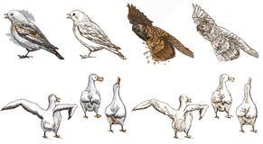 Polar animals - coloring book Royalty Free Stock Image