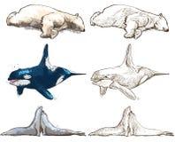 Polar animals - coloring book Royalty Free Stock Photography