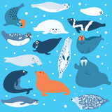 Polar animals Royalty Free Stock Images