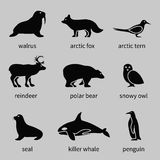 Polar animals icons Royalty Free Stock Images