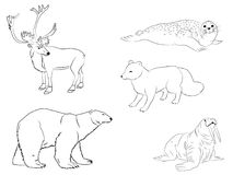 Polar arctic animals. The outline collection of reindeer, sea calf, white bear, walrus, and fox vector illustration