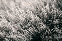 Polar (Arctic) Fox Fur Macro Royalty Free Stock Images