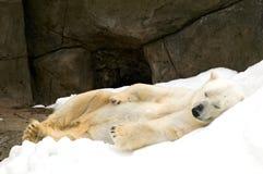 Polar bear. Sleeping in snow royalty free stock photography