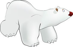 Polar bear Stock Image