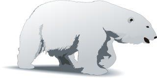 Polar bear. An illustration of white polar bear isolated on white background Stock Image