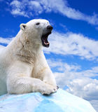 Polar bear. In wildness area against sky royalty free stock image