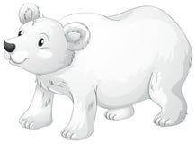 Polar bear. Illustration of polar bear on a white background Stock Photos