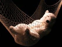 Polar bear. A plush pole bear sleeping in a hammock Royalty Free Stock Photography