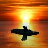 Polar bear. On an icefloe against a sunset Stock Photography