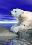 Polar Bear. A photo of a polar bear on the rocks Stock Image